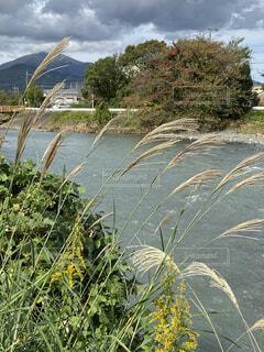 自然,風景,空,水面,山,景色,草,ススキ、,秋、秋色、風