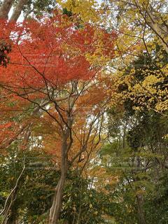 秋,紅葉,森林,屋外,樹木,落葉,草木,平塚,カエデ,総合公園,赤い、鮮やか、景観