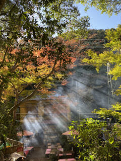 自然,秋,紅葉,森林,屋外,滝,光,樹木,煙,不動滝,湯河原,落葉,茶屋,草木,カエデ,赤い、鮮やか、景観