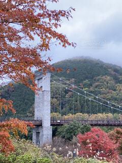 自然,秋,紅葉,森林,屋外,黄色,樹木,シンボル,落葉,草木,カエデ,秦野,戸川公園,赤い、鮮やか、景観,風の吊り橋