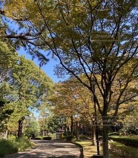 自然,風景,公園,屋外,緑,青空,葉,落ち葉,樹木,カエデ,散策路,イロハモミジ,平塚総合公園,紅葉、赤、黄色