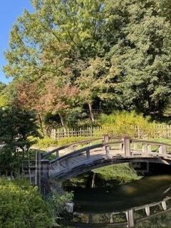 自然,風景,公園,橋,屋外,緑,青空,葉,落ち葉,樹木,庭園,カエデ,イロハモミジ,平塚総合公園,紅葉、赤、黄色