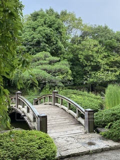 公園,橋,木,屋外,緑,樹木,庭園,新緑,草木,4月,平塚総合公園