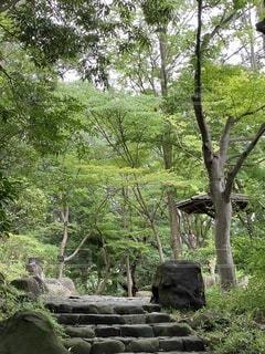 公園,木,屋外,緑,階段,樹木,庭園,新緑,草木,東屋,4月,平塚総合公園