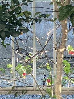 屋外,樹木,庭、小鳥,訪問者、可愛らしい、フェンス