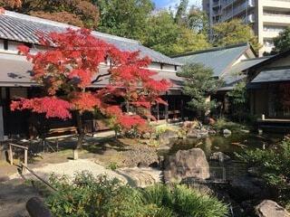 建物,花,秋,屋外,樹木,庭、旅館、庭園、紅葉、陣屋、老舗