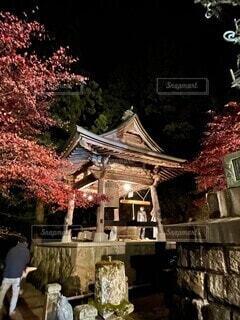大山寺の紅葉ライトアップの写真・画像素材[4074161]
