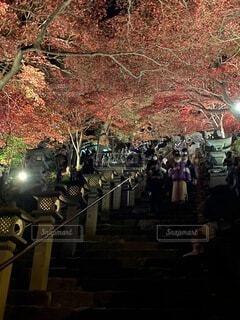 伊勢原 大山寺の紅葉ライトアップの写真・画像素材[4074168]