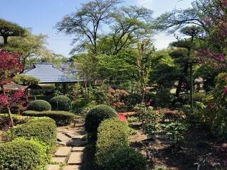 町田ボタン園の庭の写真・画像素材[4109425]