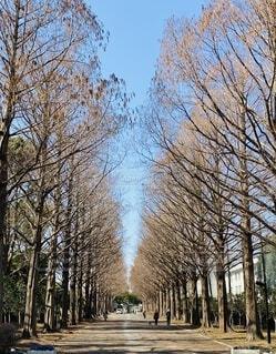 空,公園,屋外,青空,樹木,並木,お気に入り,草木,平塚,メタセコイア,総合公園