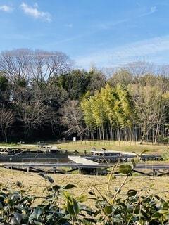 自然,風景,空,公園,屋外,青空,池,樹木,新緑,竹林,遊歩道,湧き水,木道,厳島湿性公園