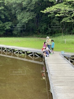 女性,自然,風景,空,公園,魚,屋外,池,子供,樹木,新緑,竹林,遊歩道,湧き水,木道,釣り糸,厳島湿性公園