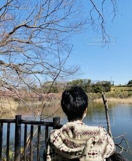 女性,空,桜,鳥,屋外,水面,池,花見,樹木,見晴らし,三浦,小松ケ池公園