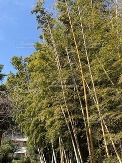 自然,冬,屋外,樹木,竹林,三浦,小松ケ池公園