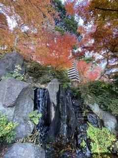 自然,秋,紅葉,屋外,池,景色,滝,樹木,岩,草木,水音