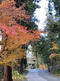 秋,紅葉,屋外,葉,景色,樹木,草木,円覚寺