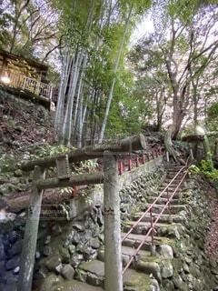 屋外,神社,階段,鳥居,樹木,竹林,不動滝,湯河原,草木