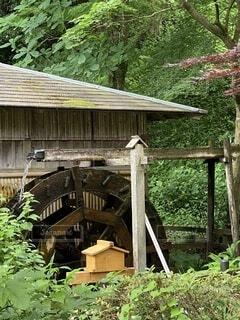 屋外,階段,家,小屋,樹木,新緑,水車,景観,草木,薬師池公園