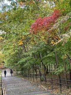 屋外,階段,樹木,新緑,茅ヶ崎,草木,紅葉前,里山公園