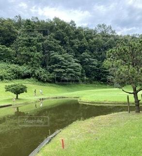 自然,空,芝生,屋外,緑,草原,水面,池,草,樹木,ゴルフ,グリーン,ショートコース