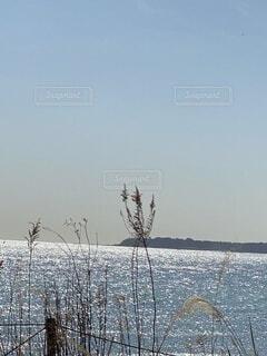 自然,風景,海,空,雲,水面,反射,光,ススキ,津久井浜,光輝く海