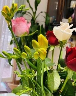 花,屋内,ピンク,赤,花束,黄色,バラ,薔薇,テーブル,草木,フリージア