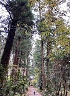 公園,秋,屋外,静寂,大木,樹木,並木,お寺,草木,参道,大雄山,最乗寺