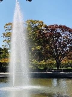自然,公園,秋,屋外,水面,池,樹木,噴水,平塚,総合公園