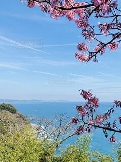 自然,風景,海,空,花,春,街並み,屋外,ビーチ,島,道路,水面,展望,山,景色,樹木,見晴らし,草木,眺め,相模湾