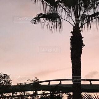 自然,風景,空,屋外,雲,夕暮れ,夕方,樹木,月,ヤシの木,USJ,ユニバ,夕方の空,草木