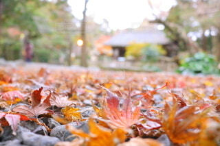 秋,葉,もみじ,オレンジ,古風,エモい