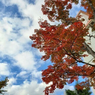 空,秋,紅葉,青空,カエデ