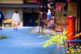 花,春,街並み,散歩,古い,ポスト,町並み,草木,お出かけ,散策