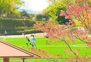 春の訪れと緑の芝生の写真・画像素材[4348894]