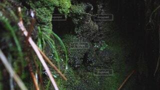 水,水滴,水族館,水面,葉,樹木,苔,滴る,洞窟,陰,日陰,草木,岩肌,陰性植物