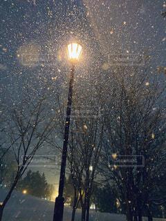 空,冬,夜,雪,屋外,樹木,街灯,夜道