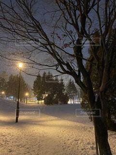 空,公園,冬,夜,木,雪,屋外,光,樹木,道,街灯,夜道,明るい,街路灯