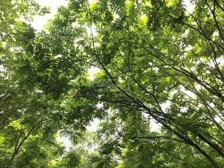 空,森林,屋外,森,緑,葉,樹木,新緑,癒し,風,マイナスイオン,草木