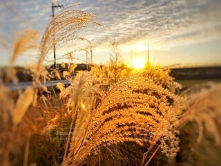 自然,風景,空,屋外,朝日,雲,山,草,ススキ,正月,お正月,日の出,新年,初日の出,草木,mountain,sun,sunrise