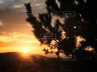 自然,空,朝日,雲,山,樹木,正月,松,お正月,日の出,新年,初日の出,草木,mountain,sun,sunrise,松木