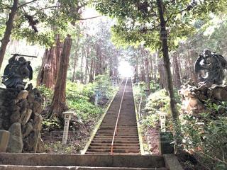 この長い階段を上ると奥の院につくの写真・画像素材[4544230]