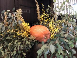 花,秋,果物,野菜,かぼちゃ,装飾,草木,ハロウィーン,ガーデン,カボチャ,セイヨウカボチャ