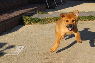 動物,かわいい,茶色,地面,子犬,ワイルドライフ,野犬