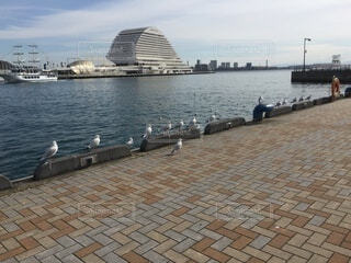 海,空,鳥,屋外,都会,カモメ,神戸,並ぶ,ソーシャルディスタンス