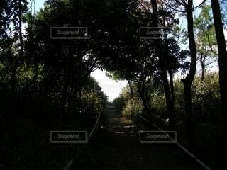 自然,風景,海,空,森林,屋外,樹木,ハート,坂道,草木