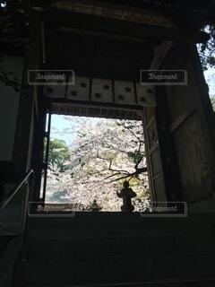 自然,風景,桜,森林,屋外,緑,神社,樹木,坂道,九州,神聖,佐賀,草木,宗教