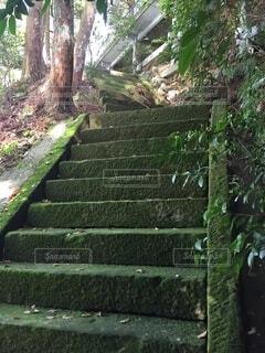 自然,風景,森林,屋外,緑,神社,樹木,坂道,九州,神聖,佐賀,草木,宗教