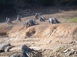 木,屋外,湖,樹木,岩,外,地面,生き物,ダム,根,汚れ,不気味,枯れる,動く