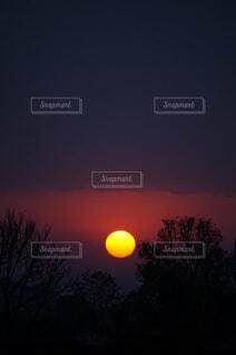 自然,空,屋外,太陽,朝日,雲,樹木,正月,お正月,日の出,新年,初日の出