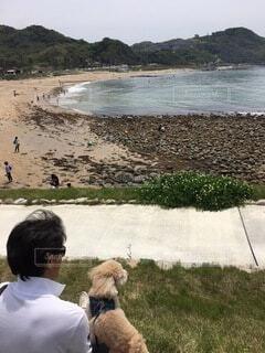 ビーチ,海岸,愛犬